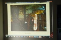 Image of Conan Masterson's work