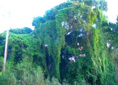 The scenery behind Fresh Milk's Prendoma accomodation