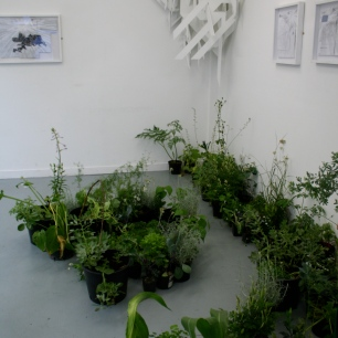 Lauren Craig, Hybrid, Installation Sculpture, Wood Plastic, Plants, Drawing, 32ft x 16ft (2010)