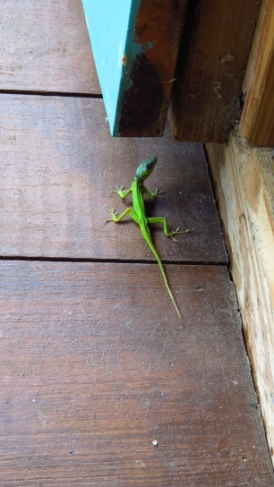 Lizard on the Fresh Milk deck