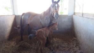 The newborn foal