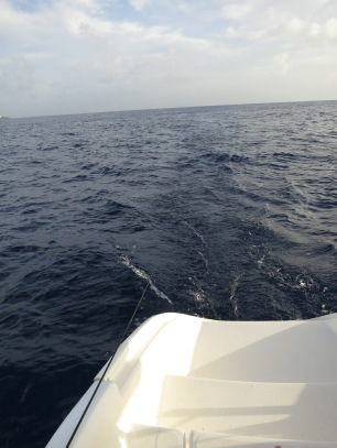 Hydrophone dragged after catamaran