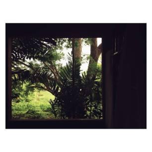 Window at Fresh Milk