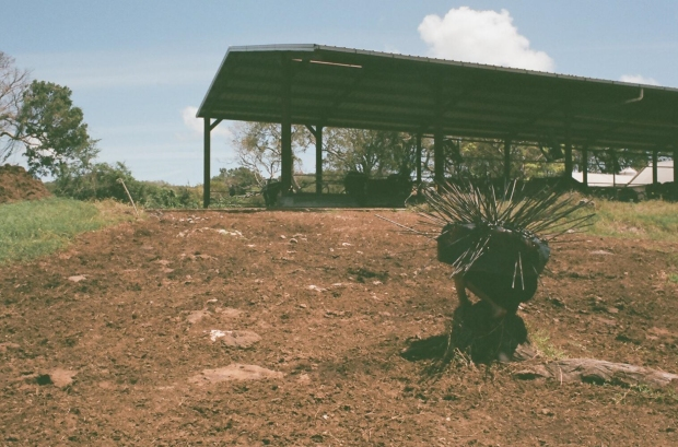 Adam Patterson, Echidna, Performance. Walkers Dairy, Barbados, 2016.