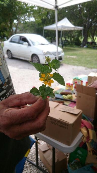 Gift of yellow flowers