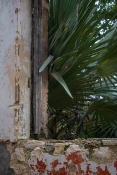 Old buildings and wandering palms.